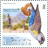 [Birds of Namibia, Typ AAP]