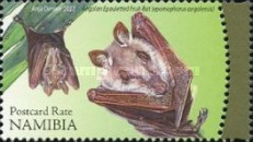 [Bats of Namibia, type AAY]