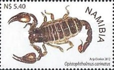 [Scorpions of Namibia, type ABH]