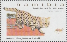 [Small Felines of Namibia, Typ AHS]