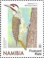 [Birds - Woodpeckers, type AIV]
