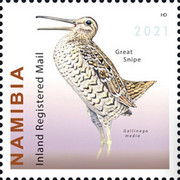 [Birds - Snipes of Namibia, type AJF]