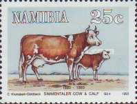 [The 100th Anniversary of Simmentalar Cattle in Namibia, type BV]