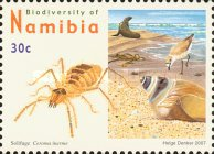 [Flora and Fauna - Biodiversity of Namibia, Typ UC]