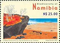 [Flora and Fauna - Biodiversity of Namibia, Typ UK]