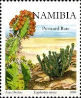 [Plants - Euphorbia's of Namibia, type VX]