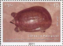 [Turtles of Nepal, type AGD]
