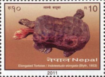 [Turtles of Nepal, type AGE]