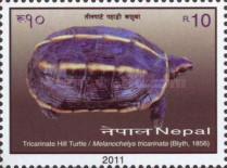[Turtles of Nepal, type AGF]