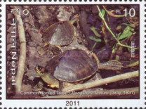 [Turtles of Nepal, type AGG]