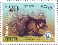 [Fauna - Small Mammals of Nepal, type APH]