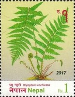 [Flora - Ferns of Nepal, type APS]