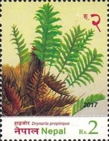[Flora - Ferns of Nepal, type APU]