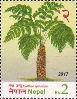[Flora - Ferns of Nepal, type APV]