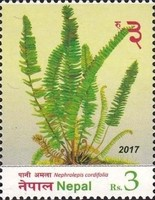 [Flora - Ferns of Nepal, type APW]