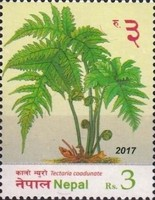 [Flora - Ferns of Nepal, type APX]