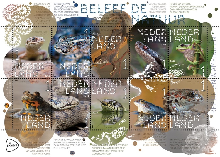 [Experience Nature - Reptiles & Amphibians, Typ ]