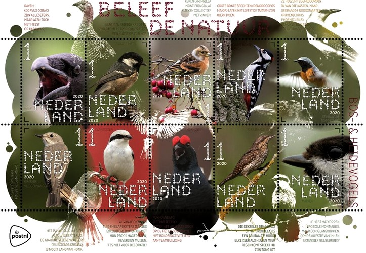[Experience Nature - Forest and Heather Birds, type ]