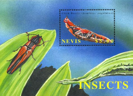 [Insects from Around the World, Typ ]
