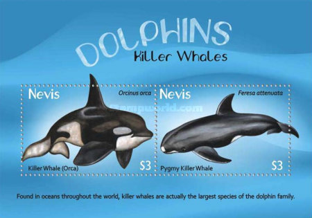 [Dolphins & Whales, Typ ]