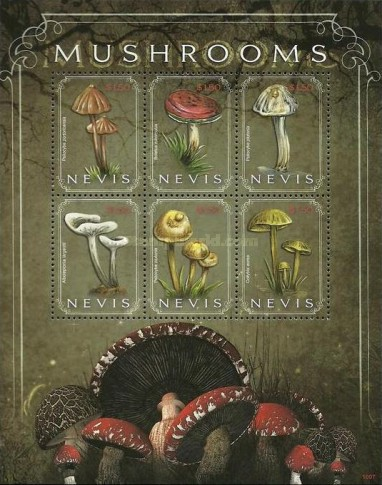 [Flora - Mushrooms, Typ ]