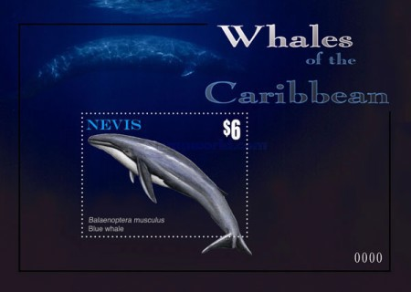[Marine Life - Whales of the Caribbean, Typ ]