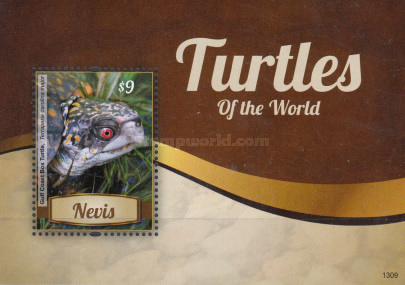 [Turtles of the World, Typ ]