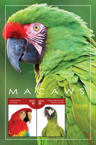 [Parrots - Macaws, Typ ]