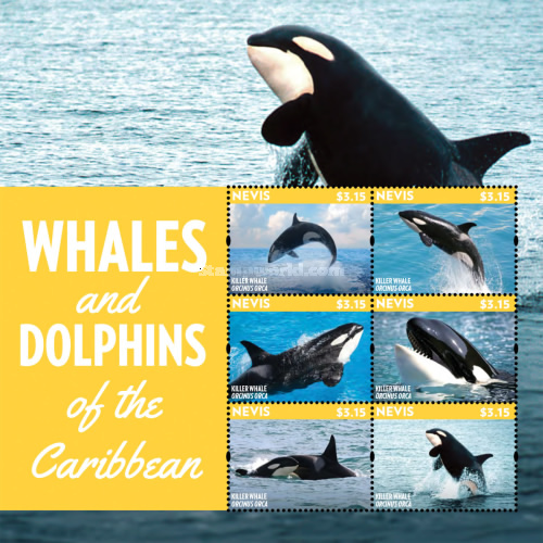 [Marine Life - Whales & Dolphins of the Caribbean, Typ ]