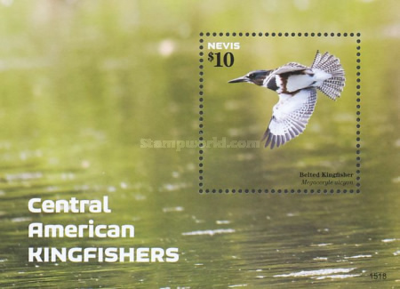 [Birds - Central-American Kingfishers, Typ ]