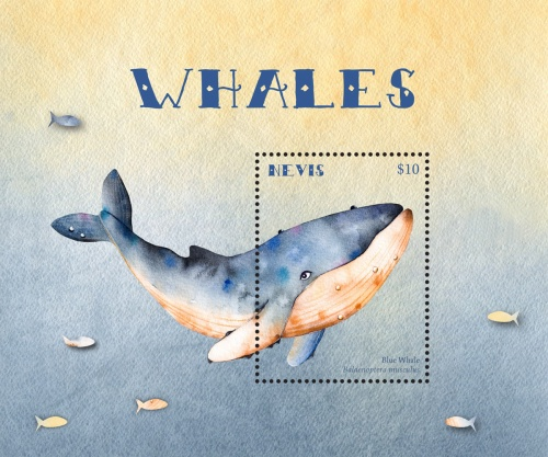 [Marine Life - Whales, Typ ]