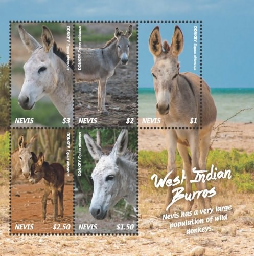 [Fauna - West Indian Burros, Typ ]