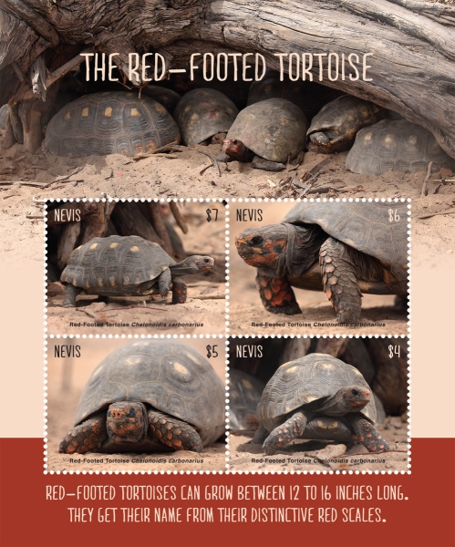 [Fauna - Red-Footed Tortoise, Typ ]