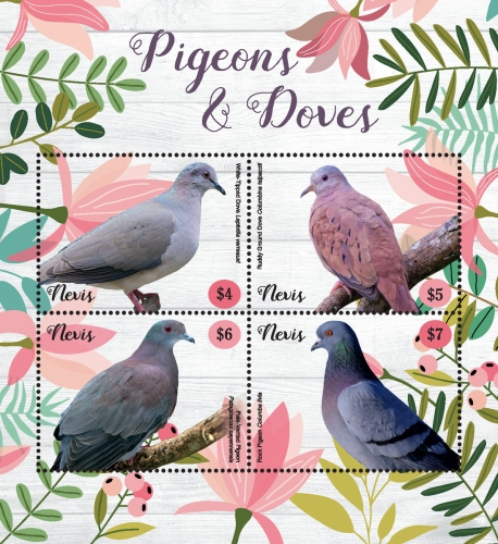 [Birds - Pigeons and Doves, type ]