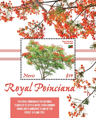 [Flora - Royal Poinciana, Typ ]