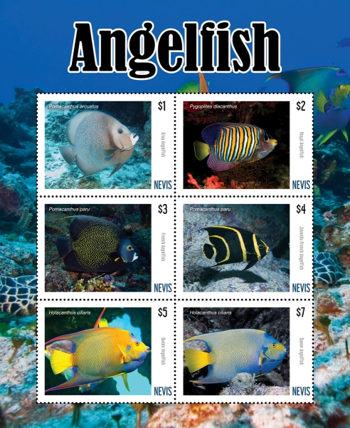 [Marine Life - Angelfish, type ]