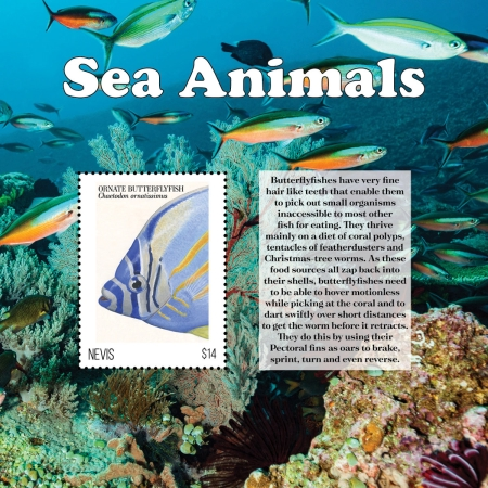 [Marine Life - Sea Animals, type ]