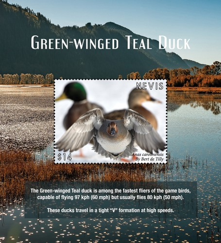 [Birds - Green-winged Teal Duck, type ]