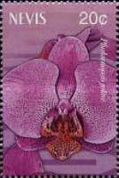 [Orchids, Typ BSD]