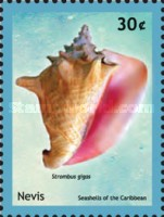 [Seashells of the Caribbean, Typ CTG]