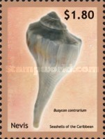 [Seashells of the Caribbean, Typ CTH]