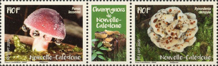 [Mushrooms of Caledonia, Typ ]