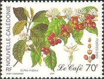 [Coffee Production, Typ AJF]
