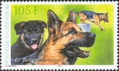 [Dogs - German Shepherd, Typ AKQ]