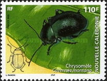 [New Caledonian Insects, Typ ANH]