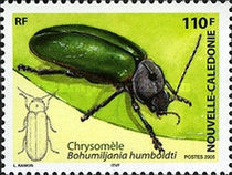 [New Caledonian Insects, Typ ANI]