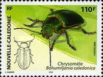 [New Caledonian Insects, Typ ANJ]