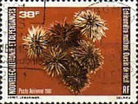 [Airmail - Sea Urchins, Typ NU]