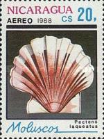 [Airmail - Shells, Typ CAW]