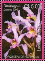 [Orchids, Typ EFR]